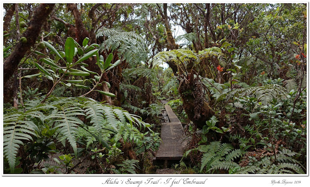 Alaka'i  Swamp Trail: I feel Embraced