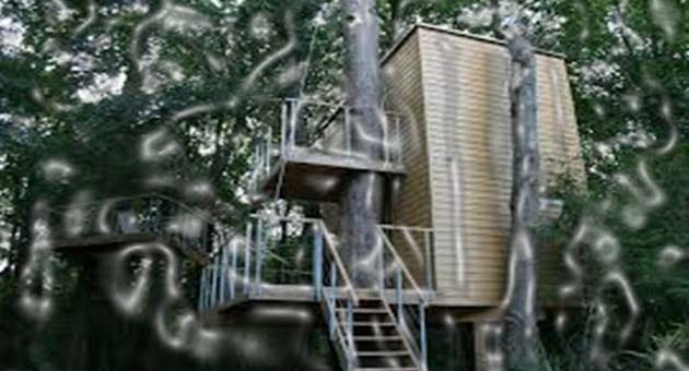 "The most modernized tree house hotel ""In Trees"" is located in Naleczow. Almost every child desire to build a thrilling house on a tree in his childhood with various outcomes possibly. Now, you can fulfill your childhood dream!"
