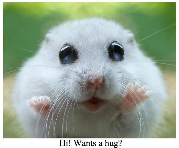 Những hình ảnh cực đáng yêu của chuột Hamster
