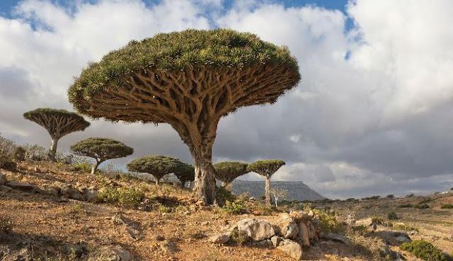 Mengenal Pulau Socotra, Tempat Dajjal Dipenjara