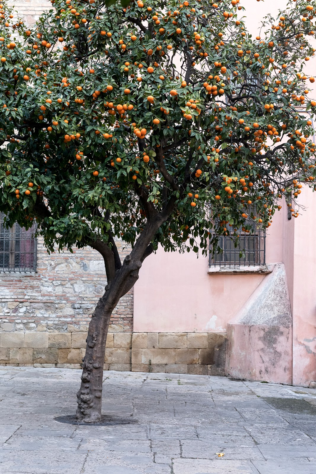 Malaga, Spain, visitspain, Andalucia, Espanja, Costa del Sol, aurinkorannikko, kaupunkikuvaus, streetphotography, valokuvaus, photography, photographer, valokuvaaja, Frida Steiner, Visualaddict, Visualaddictfrida, arkkitehtuuri, architecture, facades, old buildings, mandarin tree, fruit, mandarins