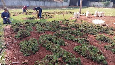 Tukang Rumput Sentul - Tukang Rumput Bogor