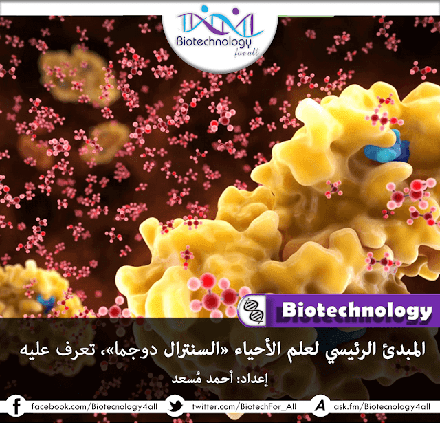 المبدئ الرئيسي لعلم الأحياء الجُزيئية «Central Dogma»