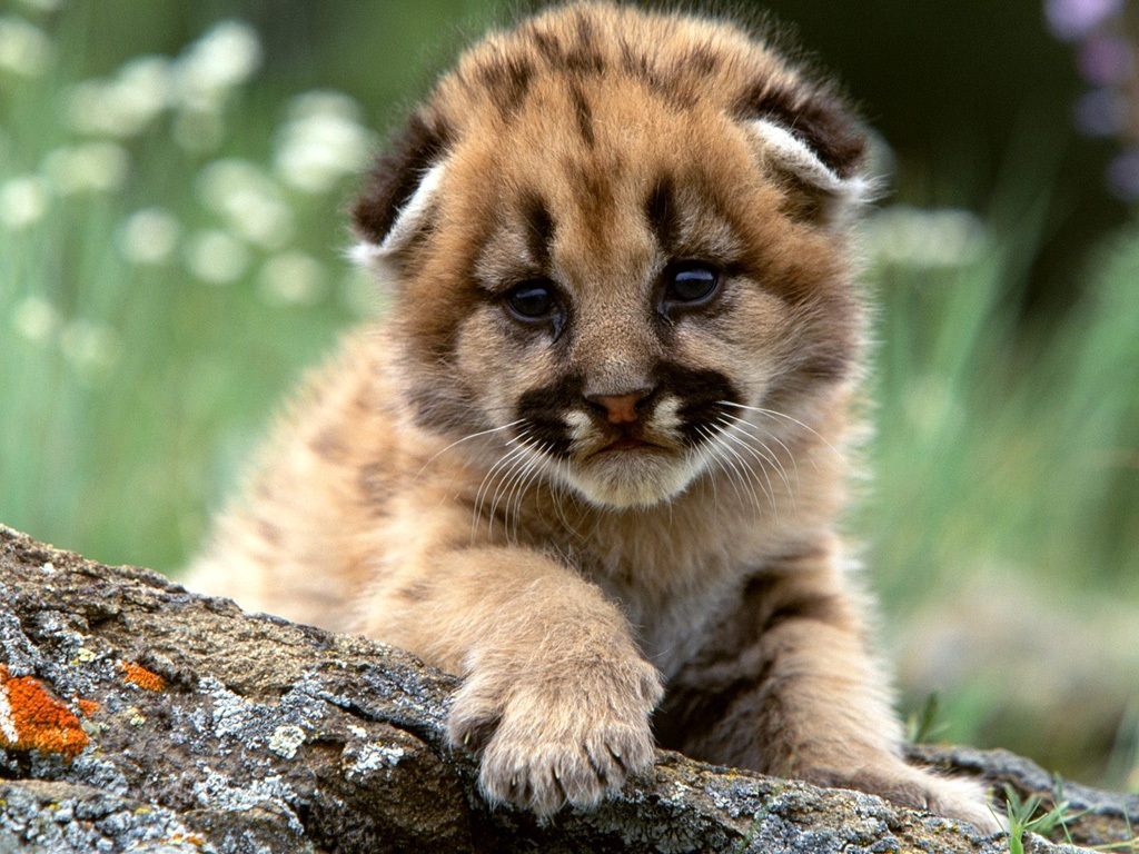 Funny wallpapers|HD wallpapers: cute baby tigers