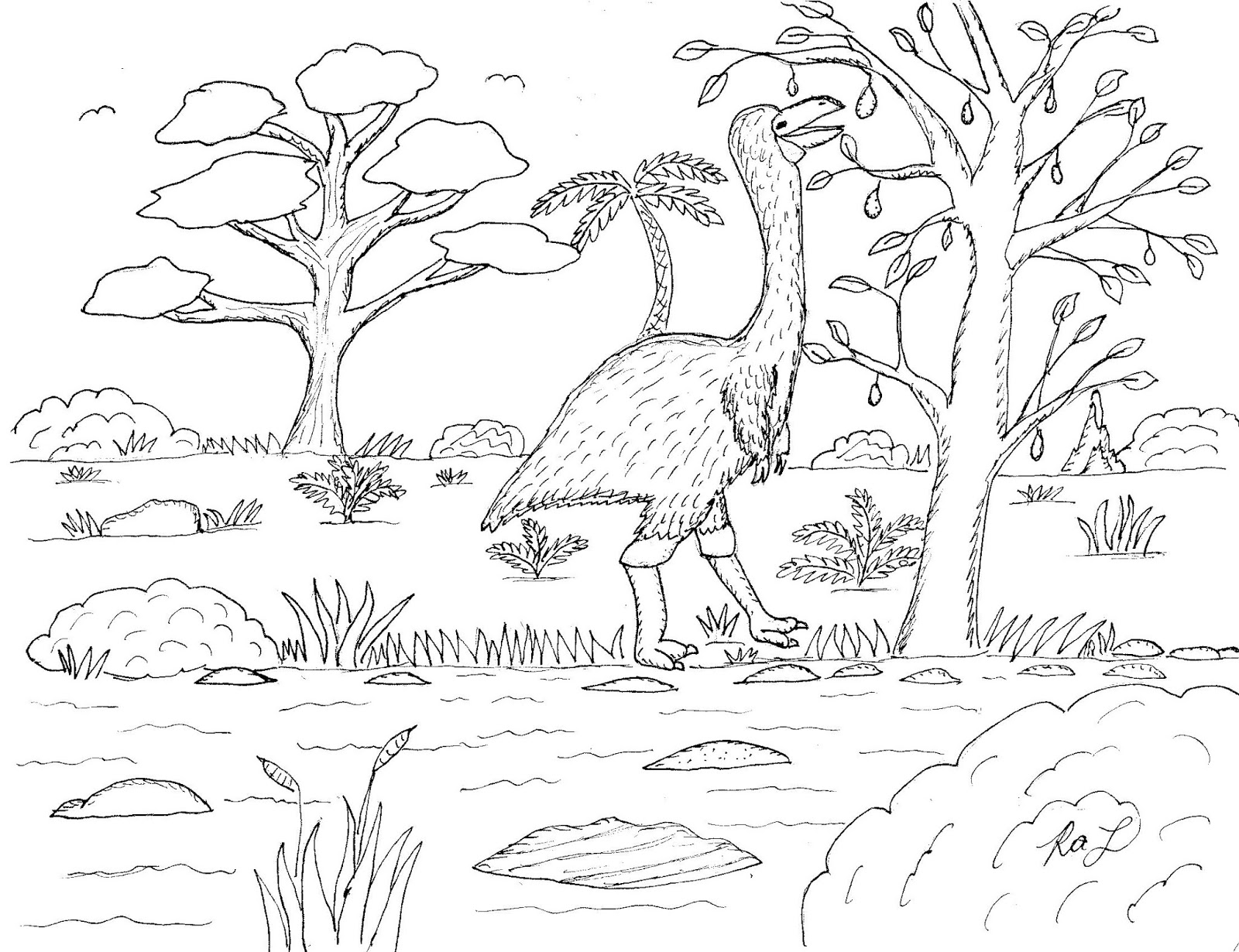 - Robin's Great Coloring Pages: Birds Of Australia Coloring Pages