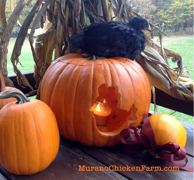 chicken on a pumpkin