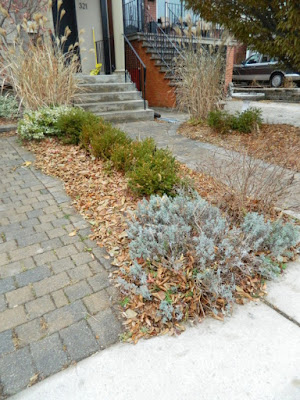 York Humewood Fall Cleanup Front Yard Before by Paul Jung Gardening Services--a Toronto Gardening Company