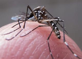 Cuidados contra a dengue devem ser reforçados no período chuvoso