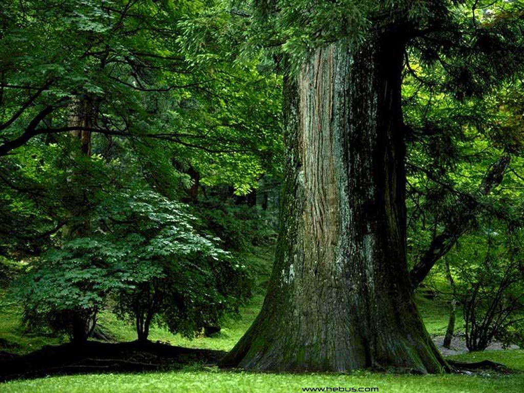 Beautiful Forests ~ A Huge Collection of Images