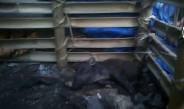 Polisi Tangkap Ustaz Dalang Hoax Babi Ngepet di Sawangan Depok