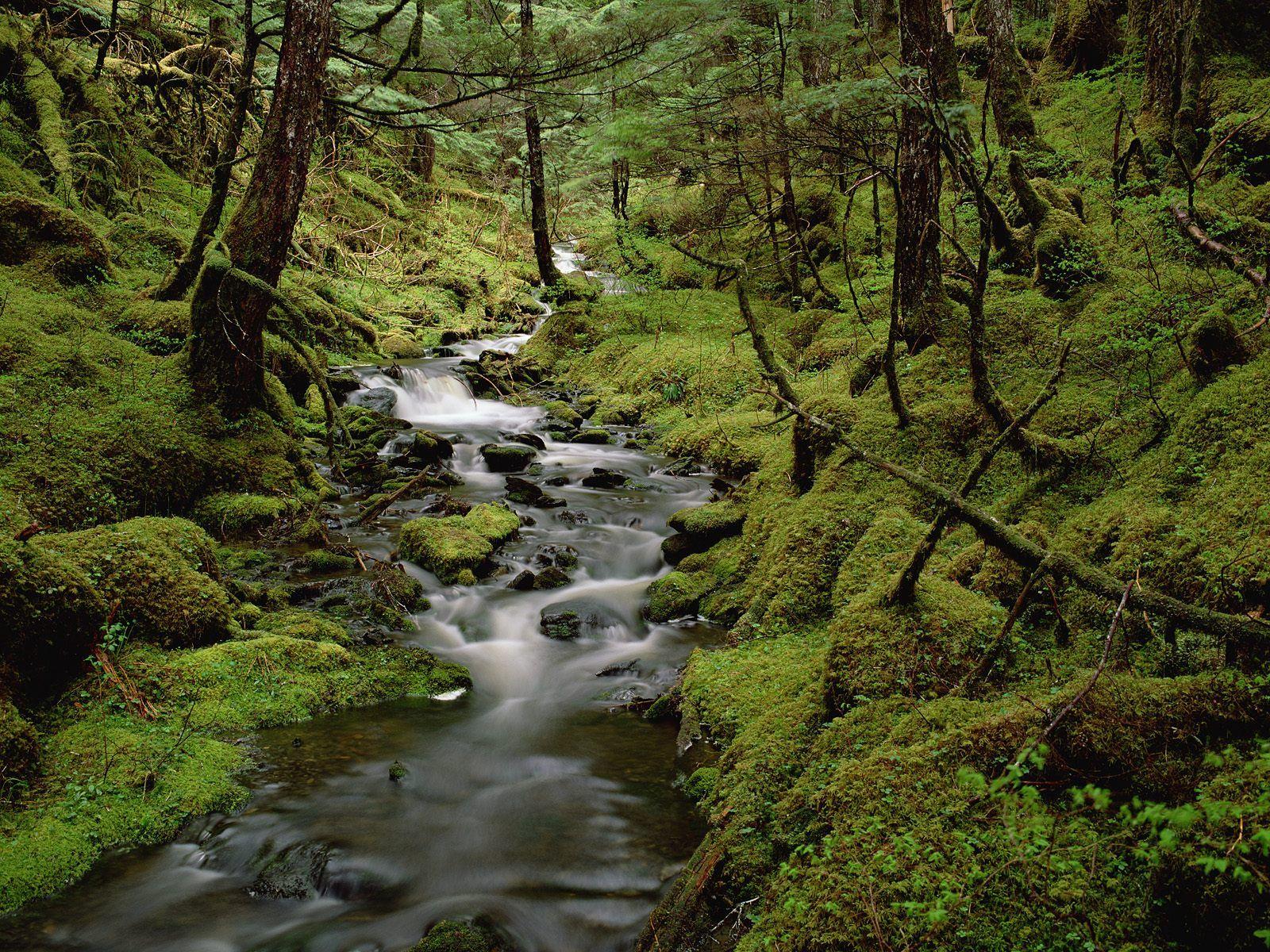 The Rainforest High Definition Desktop Wallpapers   HD ...