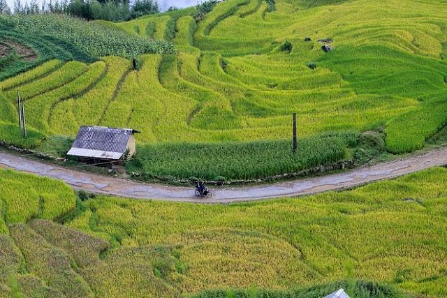 Ngắm cảnh sắc 'thiên đường' ruộng bậc thang hùng vĩ ở Y Tý Lào Cai 9