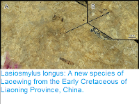 http://sciencythoughts.blogspot.co.uk/2016/11/lasiosmylus-longus-new-species-of.html