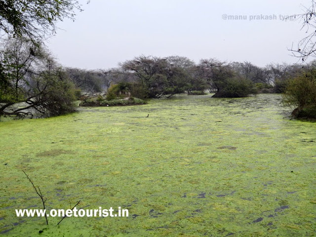 keoladeo national park , Bharatpur , rajasthan