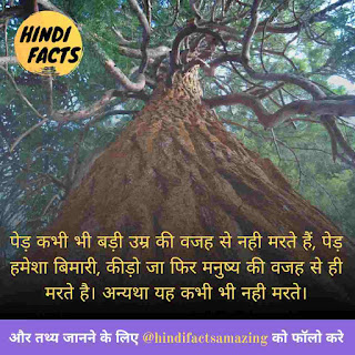 facts about tree in hindi