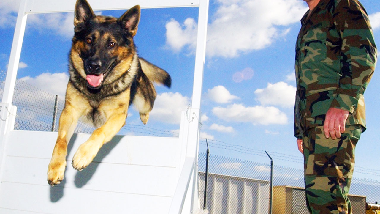 Things You May Not Know About Military Dogs
