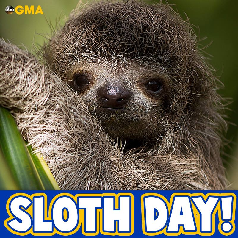 International Sloth Day Wishes