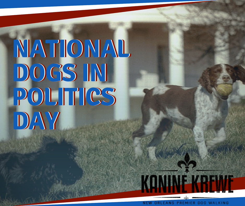 National Dogs in Politics Day Wishes Images