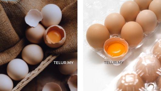 pembekal telur ayam kampung murah