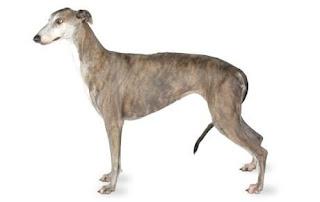 cães com baixa taxa de gordura