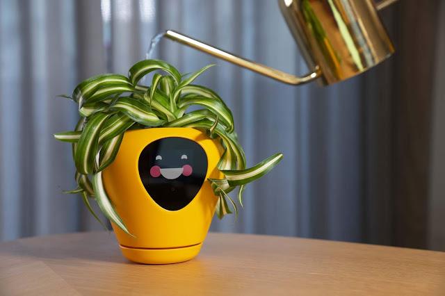 LUA, la maceta inteligente que con expresiones faciales expresa las necesidades de la planta.