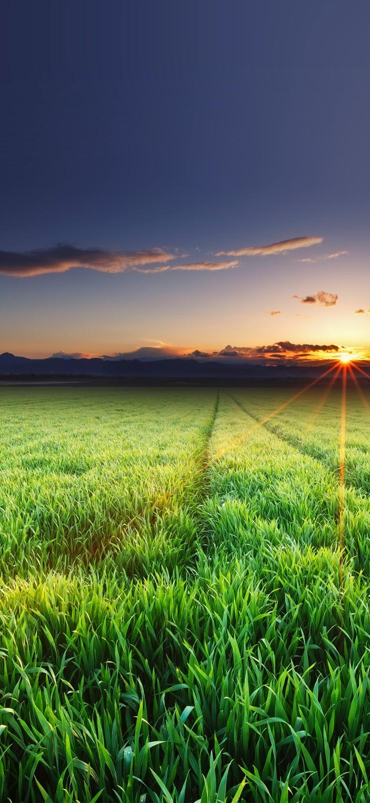 Đồng cỏ xanh giữa đêm