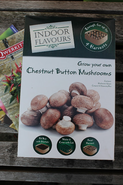 Chestnut mushroom growing kit