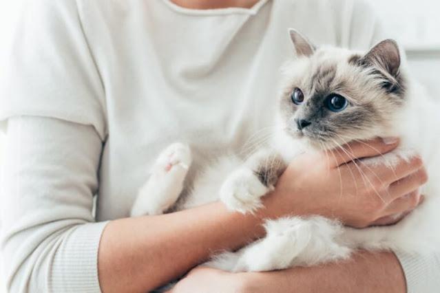 comment-porter-un-chat