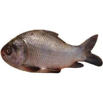 कटला मासा, Catla fish name in Marathi