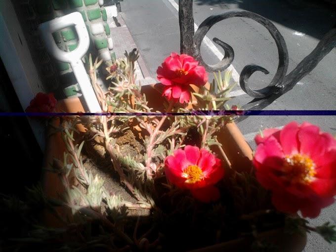 Tohumla Ekilen Çiçekler