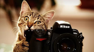 √ 5 Fakta Unik Para Pecinta Kucing Yang Harus Kamu Tau