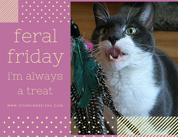 Feral Friday—I'm Always a Treat