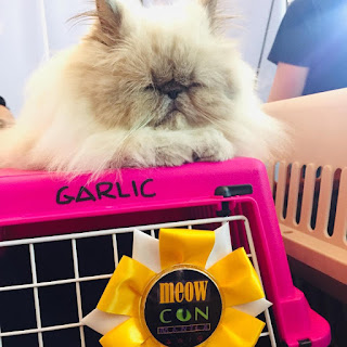 A white cat in her cage with an award ribbon during Meowcon Manila 2019