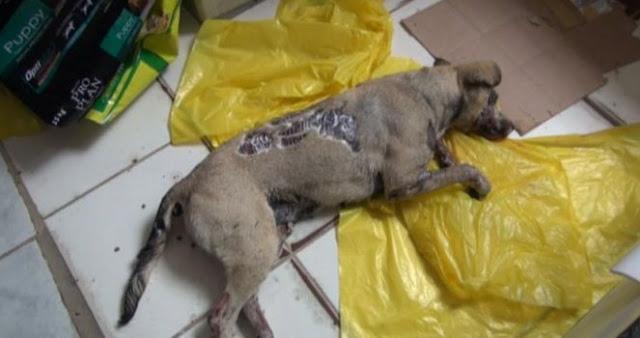 Piden justicia para una perra que murió achicharrada en unas termas