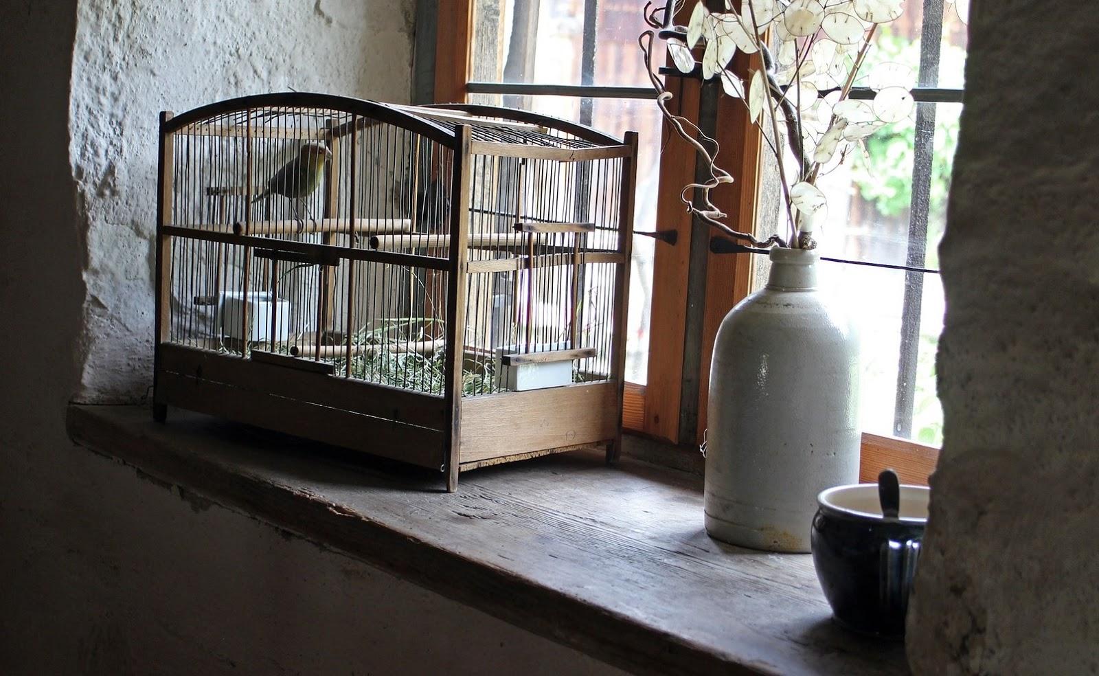 Lei na Índia proibiu o encarceramento de pássaros em gaiolas