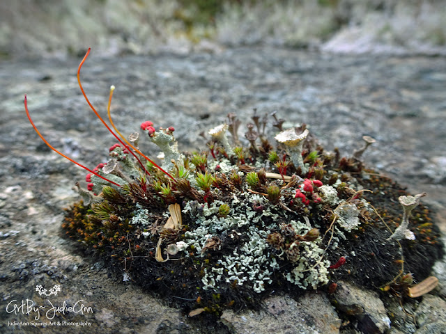 Variety Of Moss and Lichen