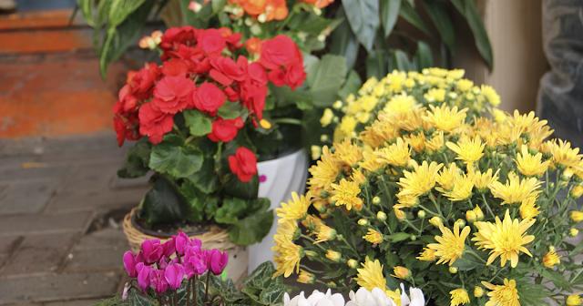 משלוח-פרחים-בצפון-מחירון-מישלוחים