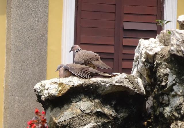 aves no Jardim Lou Lim Ioc - Macau