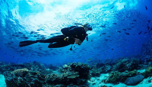 Temukan Destinasi Scuba Diving Terbaik Di Indonesia