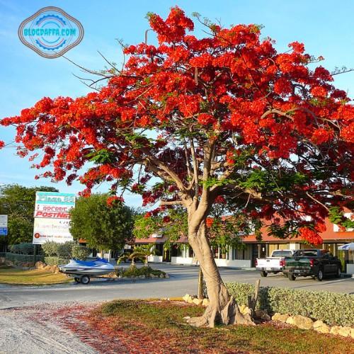 Jenis tanaman hias pohon