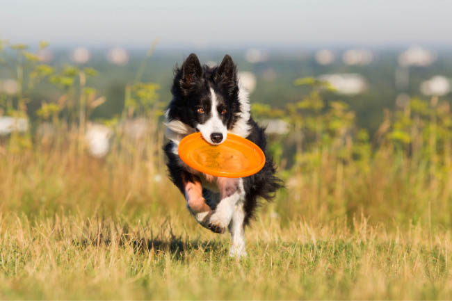 Jak aktywnie spędzać czas z psem?