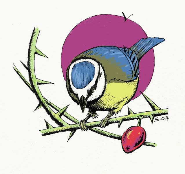cyanistes caerulus