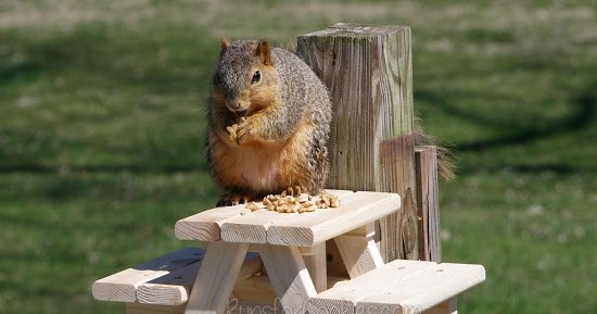 Runs For Cookies How To Build A Squirrel Picnic Table Tutorial