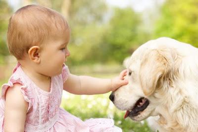 Perros mascotas niños