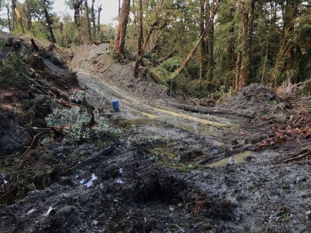 Corte ilegal de bosque nativo