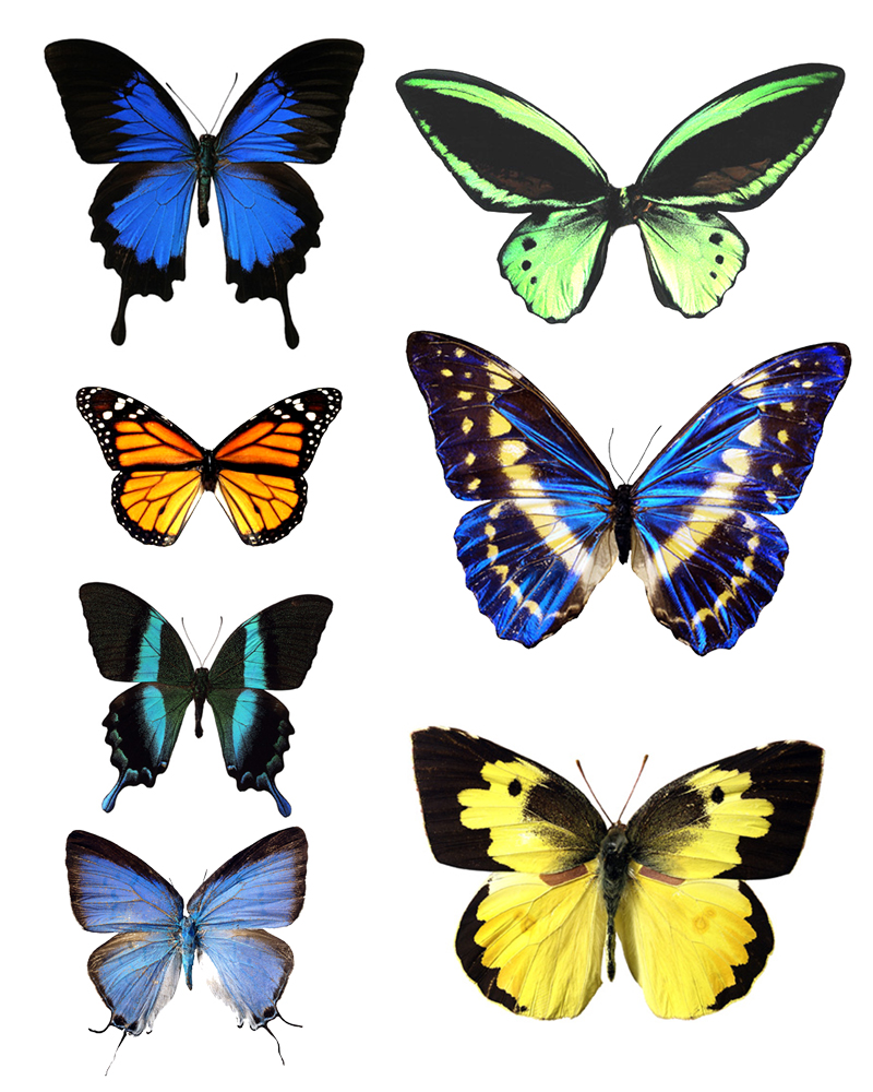 It's just a graphic of Gratifying Free Printable Butterflies