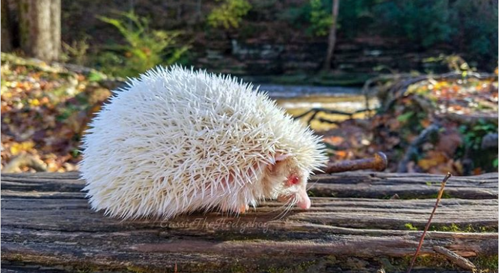 21 Amazing Photos Of Albino Animals