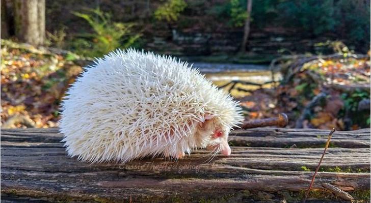 21 Amazing Photos Of Albino Animals
