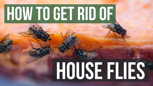 Get Rid Of Houseflies In Your Home