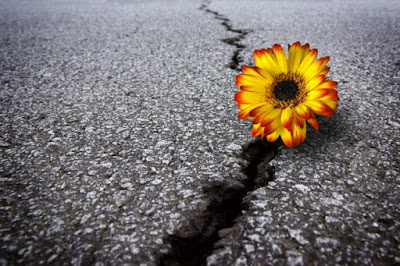 Não me mande Mais dor Me mande Uma flor Por favor